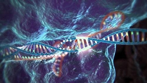 Crispr, la nueva técnica de edición genética