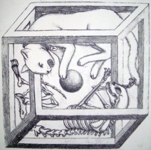 gato-de-schroedinger
