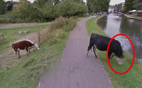 google-street-view-difumina-el-rostro-de-una-vaca